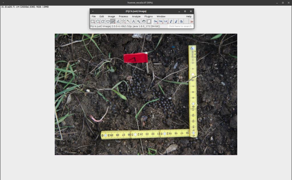 Fotografía de huevas con testigo métrico y marcadora numérica