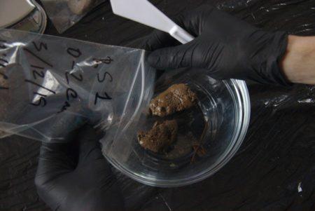 Depositando muestra en un recipiente de cristal